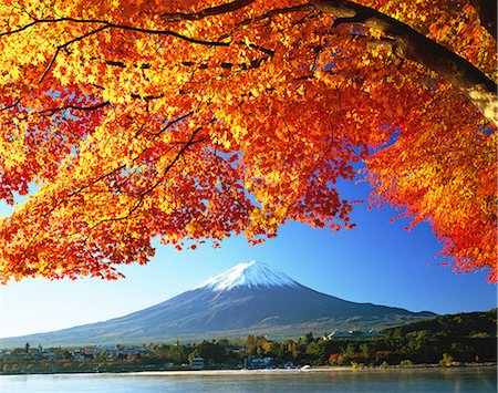 snow capped - Autumn leaves and Mount Fuji Stock Photo - Rights-Managed, Code: 859-07495596