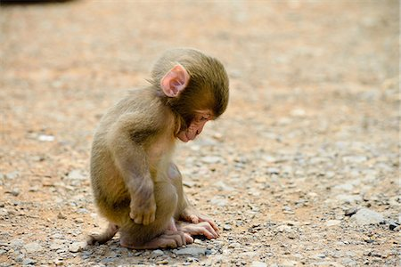 Monkey Stock Photo - Rights-Managed, Code: 859-07566190