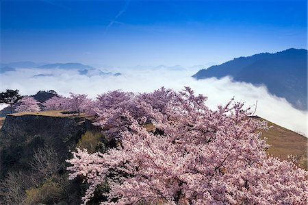 Hyogo Prefecture, Japan Stock Photo - Rights-Managed, Code: 859-07635801