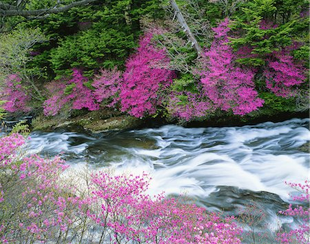 streams scenic nobody - Tochigi Prefecture, Japan Stock Photo - Rights-Managed, Code: 859-07845906