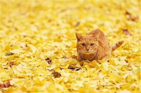 pictures cats - Cat in a park Stock Photo - Rights-Managed, Code: 859-07961843