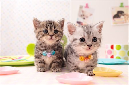 Cats Stock Photo - Rights-Managed, Code: 859-08244393