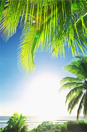 palm - Guam Stock Photo - Rights-Managed, Code: 859-08358221