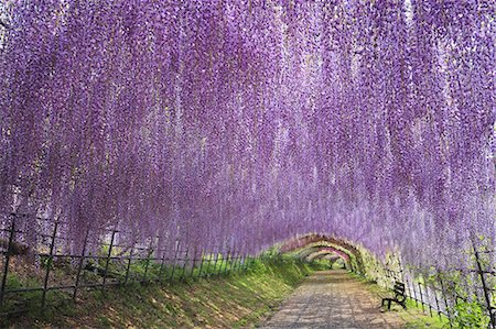 spring - Fukuoka Prefecture, Japan Stock Photo - Rights-Managed, Code: 859-08358554