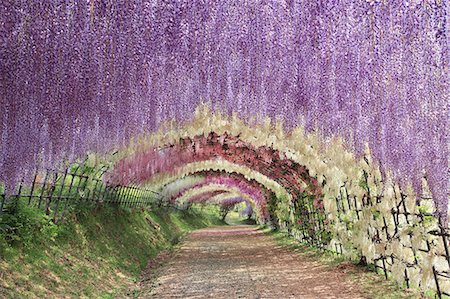 scenic and spring (season) - Fukuoka Prefecture, Japan Stock Photo - Rights-Managed, Code: 859-08358552