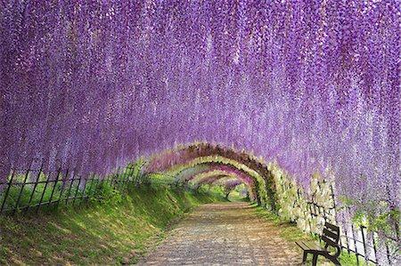 fantastically - Fukuoka Prefecture, Japan Stock Photo - Rights-Managed, Code: 859-08358553