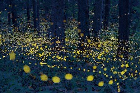 fantastically - Okayama Prefecture, Japan Stock Photo - Rights-Managed, Code: 859-08358561