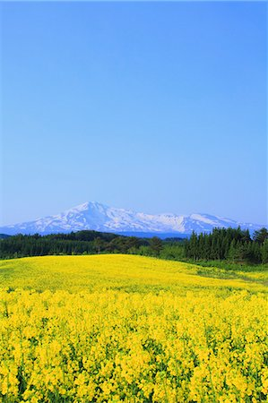 Akita Prefecture, Japan Stock Photo - Rights-Managed, Code: 859-08359316