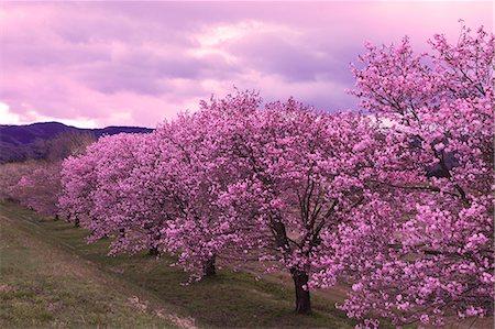 fantastically - Yamagata Prefecture, Japan Stock Photo - Rights-Managed, Code: 859-08359313