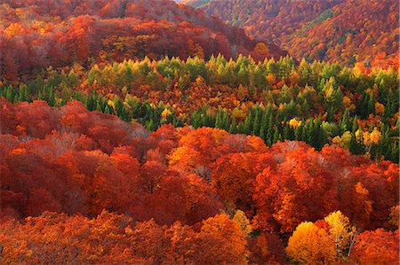 Aomori Prefecture, Japan Stock Photo - Rights-Managed, Code: 859-08359336