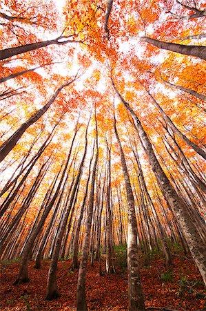 fantastically - Aomori Prefecture, Japan Stock Photo - Rights-Managed, Code: 859-08359340