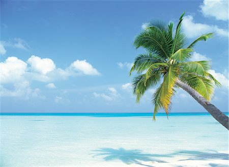 A Palm Tree Over The Shore Stock Photo - Rights-Managed, Code: 859-03036467