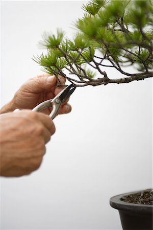 Person Snipping a Tiny Branch off a Bonsai Tree Stock Photo - Rights-Managed, Code: 859-03038025