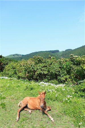 Horse,Cape Toi,Miyazaki,Japan Stock Photo - Rights-Managed, Code: 859-03598856