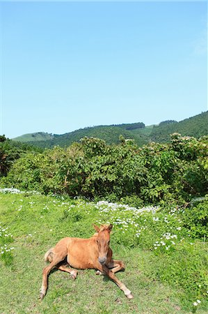 Horse,Cape Toi,Miyazaki,Japan Stock Photo - Rights-Managed, Code: 859-03598856