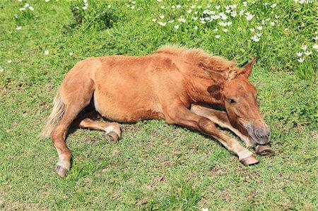 Horse,Cape Toi,Miyazaki,Japan Stock Photo - Rights-Managed, Code: 859-03598857