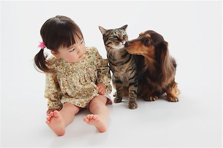 Japanese Cat-Miniature Dachshund And A Girl Stock Photo - Rights-Managed, Code: 859-03599524