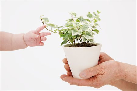 Human Hands Holding A Plant Pot Stock Photo - Rights-Managed, Code: 859-03780047