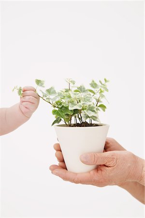 Human Hands Holding A Plant Pot Stock Photo - Rights-Managed, Code: 859-03780049
