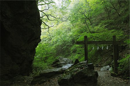 Scene Of Japanese Forest Stock Photo - Rights-Managed, Code: 859-03839435