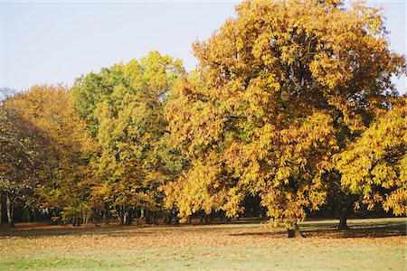 Trees In Fall Color Stock Photo - Rights-Managed, Code: 859-03839555
