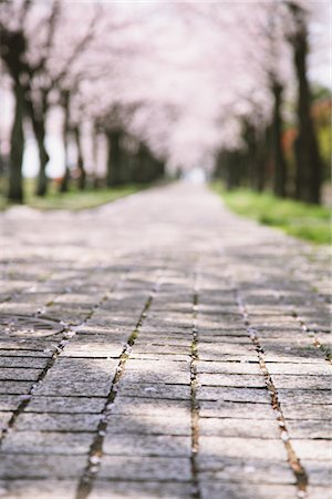 Cherry blossoms lined street Stock Photo - Rights-Managed, Code: 859-03840821