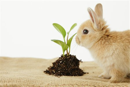 earth no people - Rabbit Sitting Near Budding Plant Stock Photo - Rights-Managed, Code: 859-03885035