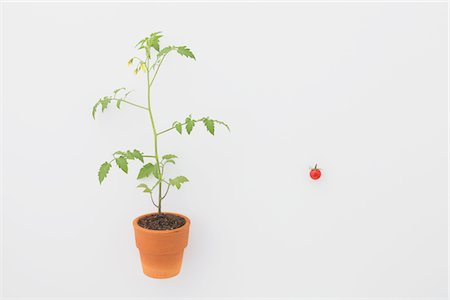 sprout - Cherry tomato and Seedling Stock Photo - Rights-Managed, Code: 859-03885258