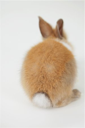Rear View Of Sitting Rabbit Stock Photo - Rights-Managed, Code: 859-03982799