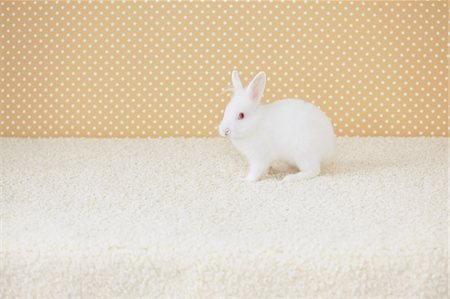 fur - White Rabbit On Floor Mat Stock Photo - Rights-Managed, Code: 859-03982837