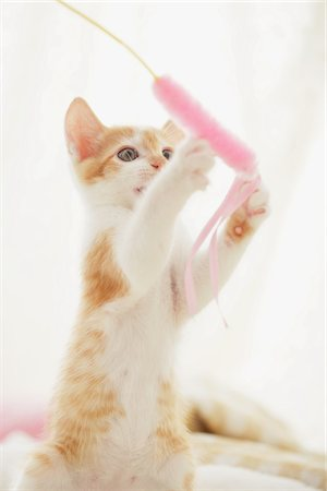 Baby Kitten Playing With Toy Stock Photo - Rights-Managed, Code: 859-03982849