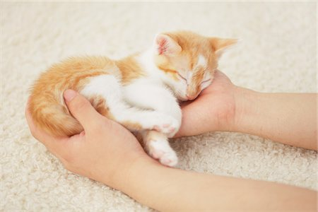 furry - Baby Kitten Sleeping In Owner's Hands Stock Photo - Rights-Managed, Code: 859-03982915