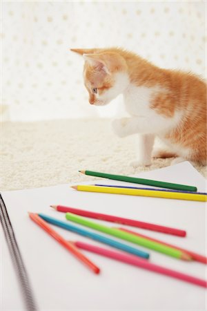 Baby Kitten Playing With Notebook And Colored Pencils Stock Photo - Rights-Managed, Code: 859-03982934