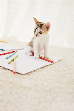 Baby Kitten Playing With Notebook And Colored Pencils Stock Photo - Rights-Managed, Code: 859-03982935
