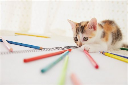 Baby Kitten Playing With Notebook And Colored Pencils Stock Photo - Rights-Managed, Code: 859-03982936
