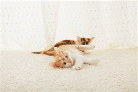 Two Baby Kitten Playing On Floor Mat Stock Photo - Rights-Managed, Code: 859-03982944