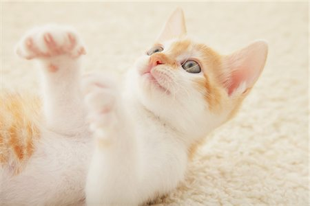 Two Baby Kitten Playing On Floor Mat Stock Photo - Rights-Managed, Code: 859-03982945