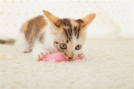 Baby Kitten Playing With Toy Stock Photo - Rights-Managed, Code: 859-03982948