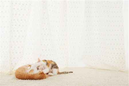 Two Baby Kittens Playing Stock Photo - Rights-Managed, Code: 859-03982943