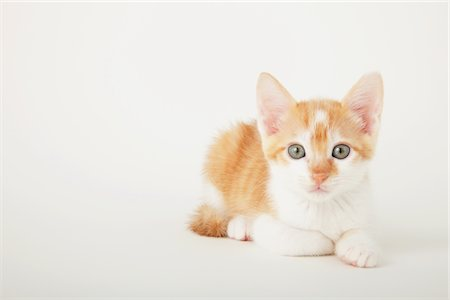 furry - Tabby Baby Kitten Sitting Stock Photo - Rights-Managed, Code: 859-03982961