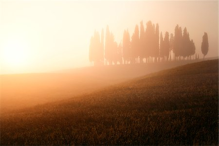 Italy, Tuscany, Siena district, Orcia Valley, Cypress on the hill near San Quirico d'Orcia Stock Photo - Rights-Managed, Code: 862-05998057