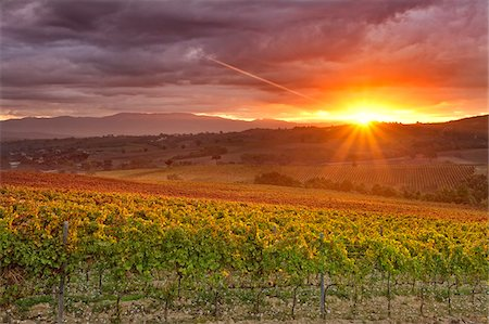 Italy, Umbria, Perugia district. Autumnal Vineyards near Montefalco Stock Photo - Rights-Managed, Code: 862-05998223