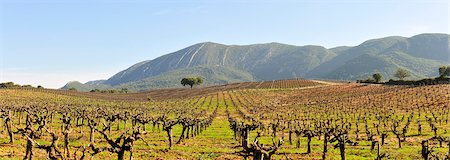 Vineyards in the Arrabida Natural Park. Portugal Stock Photo - Rights-Managed, Code: 862-05998925