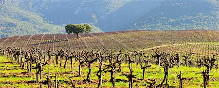 Vineyards in the Arrabida Natural Park. Portugal Stock Photo - Rights-Managed, Code: 862-05998926