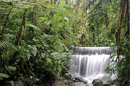 Waterfall in the cloudforest at Sachatamia, Ecuador Stock Photo - Rights-Managed, Code: 862-06541265