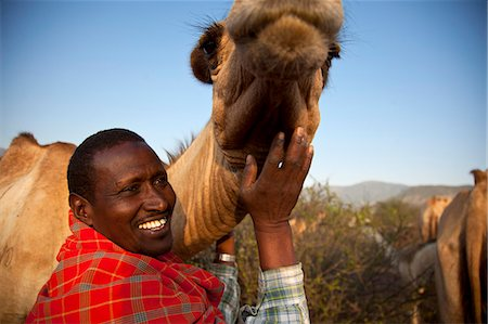 Isiolo, Northern Kenya.  A traditional Somali pastoralist with a camel in his Boma. Stock Photo - Rights-Managed, Code: 862-06542276