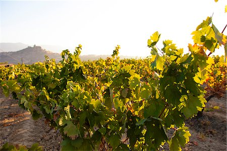 Vineyards around the town of San Vicente de la Sonsierra, on the border of La Rioja and the Basque Country. Spain, Europe. Stock Photo - Rights-Managed, Code: 862-06542840