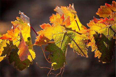 Vineyard in Laguardia, La Rioja, Spain, Europe Stock Photo - Rights-Managed, Code: 862-06542926