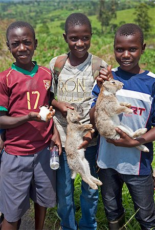 Young boys take rabbits and a guinea pig to sell at a roadside market on the road between Fort Portal and Kasese, Uganda, Africa Stock Photo - Rights-Managed, Code: 862-06543209