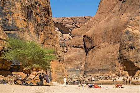 Chad, Wadi Archei, Ennedi, Sahara.  A large herd of camels watering at Wadi Archei, an important source of permanent water. Stock Photo - Rights-Managed, Code: 862-06676514